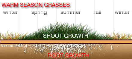 Growth Pattern Warm Season Grass