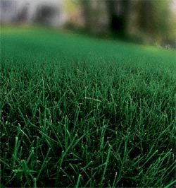 Picture Perfect Lawn